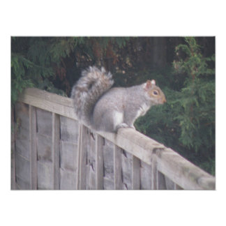 Gorgeous Gray Squirrel Poster