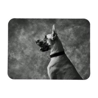 Gorgeous Great Dane Rectangular Photo Magnet