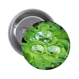 Gorgeous green button