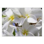 Gorgeous Hawaiian Plumeria Note Card