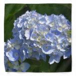 Gorgeous Light Blue Flowering Hydrangea Bush Bandana