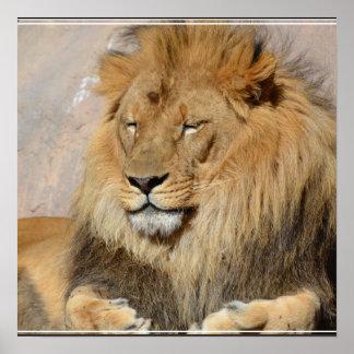 Gorgeous Lion Poster