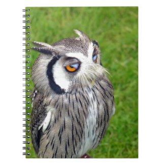 Gorgeous Little Owl Notebook