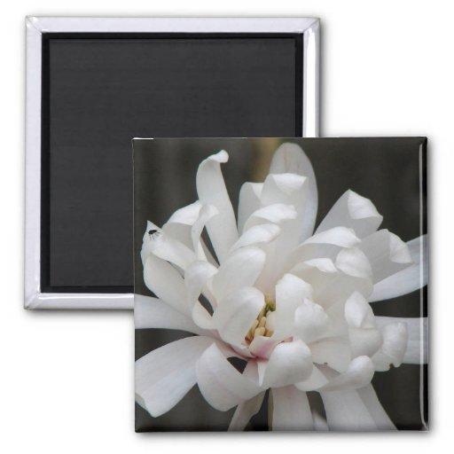 Gorgeous Magnolia Centennial Bloom Fridge Magnet