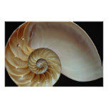 Gorgeous Nautilus shell Posters