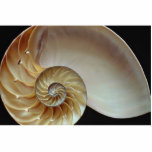 "Gorgeous Nautilus shell Statuette<br><div class=""desc"">Nautilus shell gift product. A Great Nautilus shell product.</div>"