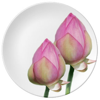 Gorgeous nymphaea waterlily aquatic flower plant