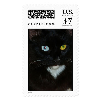 Gorgeous odd eyed black cat stamp
