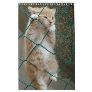 Gorgeous Orange Cats Calendar