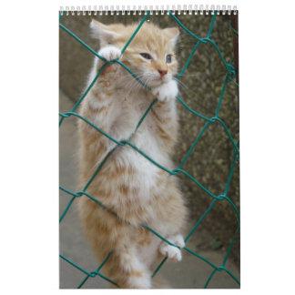 Gorgeous Orange Cats Calendar