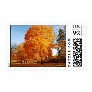 Gorgeous orange cherry blossoms Stamp