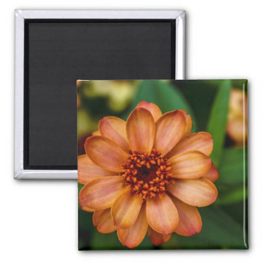 Gorgeous Orange Flower in Central Park 2 Inch Square Magnet