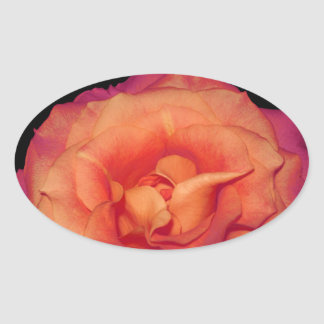 Gorgeous Orange Rose Oval Sticker