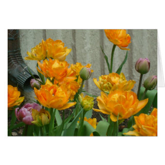 Gorgeous Orange Tulips By The Waterspout Note Card
