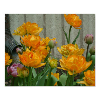 Gorgeous Orange Tulips By The Waterspout Poster
