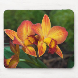 Gorgeous Orange Yellow Rhyncattleanthe Orchid Mouse Pad