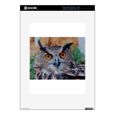 GORGEOUS OWL EYES iPad SKIN