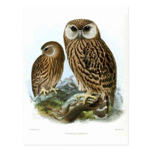 GORGEOUS OWL EYES POSTCARDS