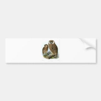 GORGEOUS OWLS BUMPER STICKER
