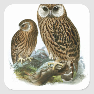 GORGEOUS OWLS SQUARE STICKER