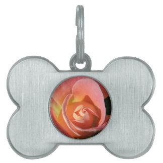 Gorgeous Peach Colored Rose Design. Pet Tag