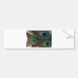 Gorgeous Peacock Feather Bumper Sticker