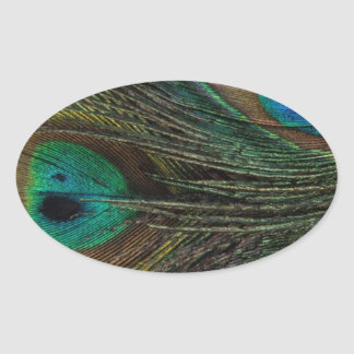 Gorgeous Peacock Feather Oval Sticker