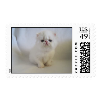 gorgeous persian baby stamps
