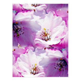 Gorgeous pink blossom wedding gift postcard