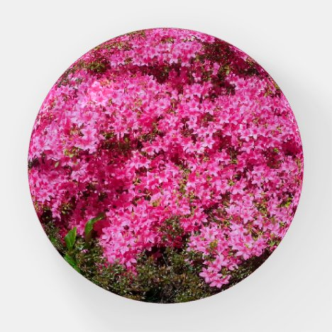 Gorgeous Pink Flowers Paperweight