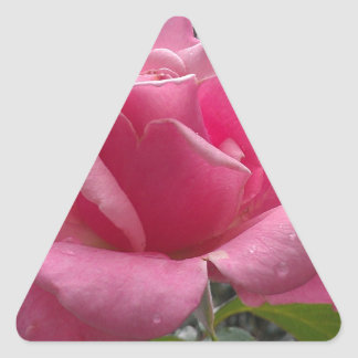Gorgeous pink rose flower in bloom! triangle sticker