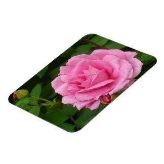 Gorgeous Pink Rose Magnet