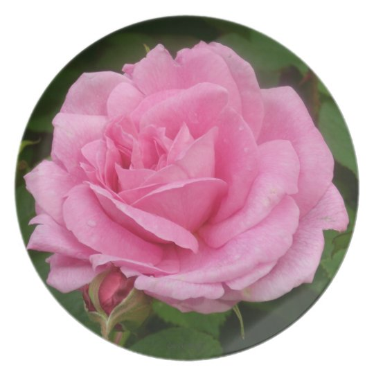 Gorgeous Pink Rose Melamine Plate