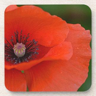 Gorgeous Poppy Coaster