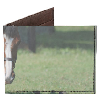 Gorgeous Quarter Horse Billfold Wallet