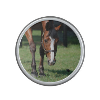 Gorgeous Quarter Horse Bluetooth Speaker