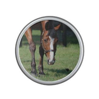 Gorgeous Quarter Horse Bluetooth Speaker