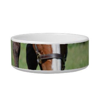 Gorgeous Quarter Horse Bowl