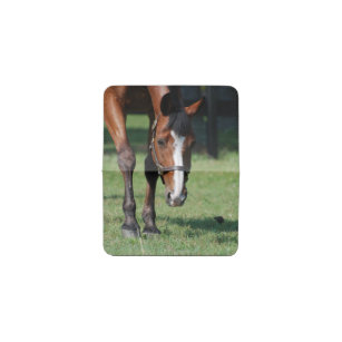Quarter horse business card holders cases zazzle gorgeous quarter horse business card holder colourmoves