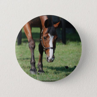 Gorgeous Quarter Horse Button
