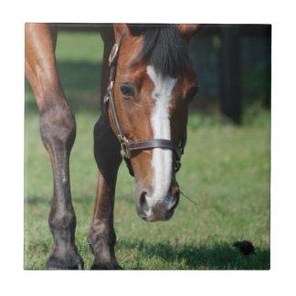 Gorgeous Quarter Horse Ceramic Tile