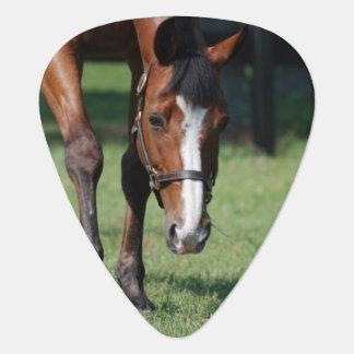 Gorgeous Quarter Horse Guitar Pick