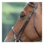 Gorgeous Quarter Horse Invite