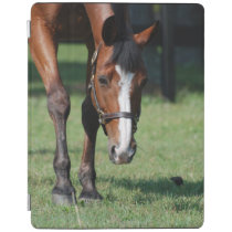 Gorgeous Quarter Horse iPad Smart Cover