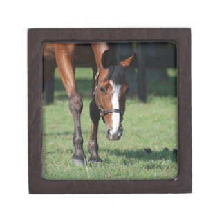 Gorgeous Quarter Horse Jewelry Box