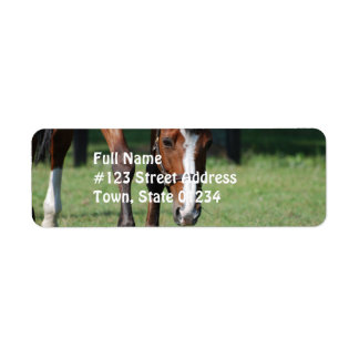 Gorgeous Quarter Horse Label