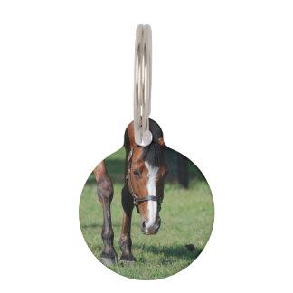 Gorgeous Quarter Horse Pet Tag