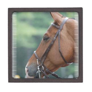 Gorgeous Quarter Horse Premium Gift Box