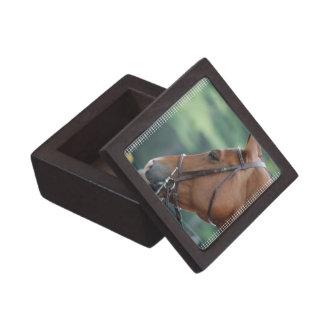 Gorgeous Quarter Horse Premium Gift Boxes