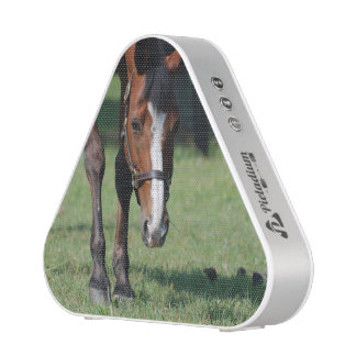 Gorgeous Quarter Horse Speaker